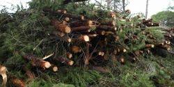 Recursos Bioenergéticos contra el Cambio Climático