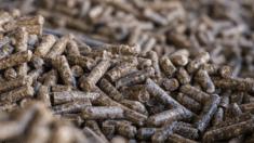 biomasa como combustible