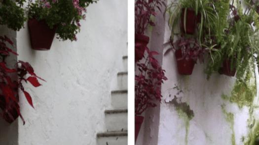 Humedades: rehabilitación en muros de morteros de cal