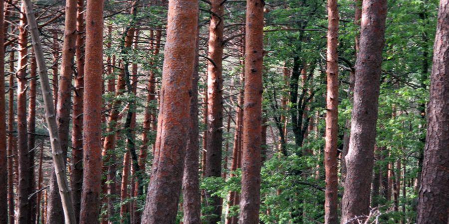 AVEBIOM apoya el calentamiento de edificios públicos con biomasa en Castilla y León